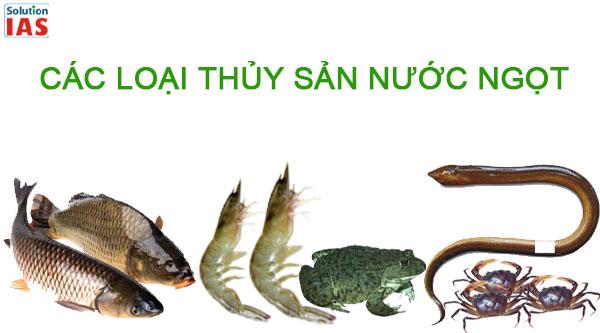Các loại thủy sản nước ngọt